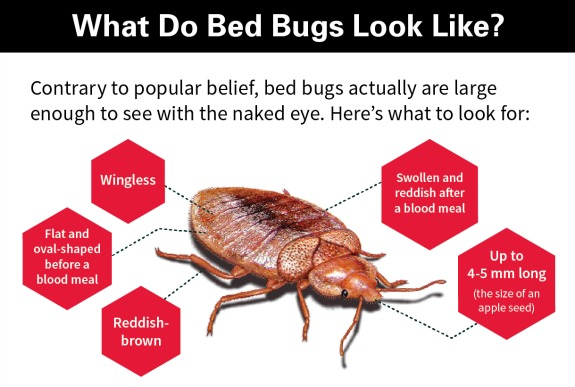 Orkin 39 S Guide To Ousting Bed Bugs Atlantas Frugal Mom